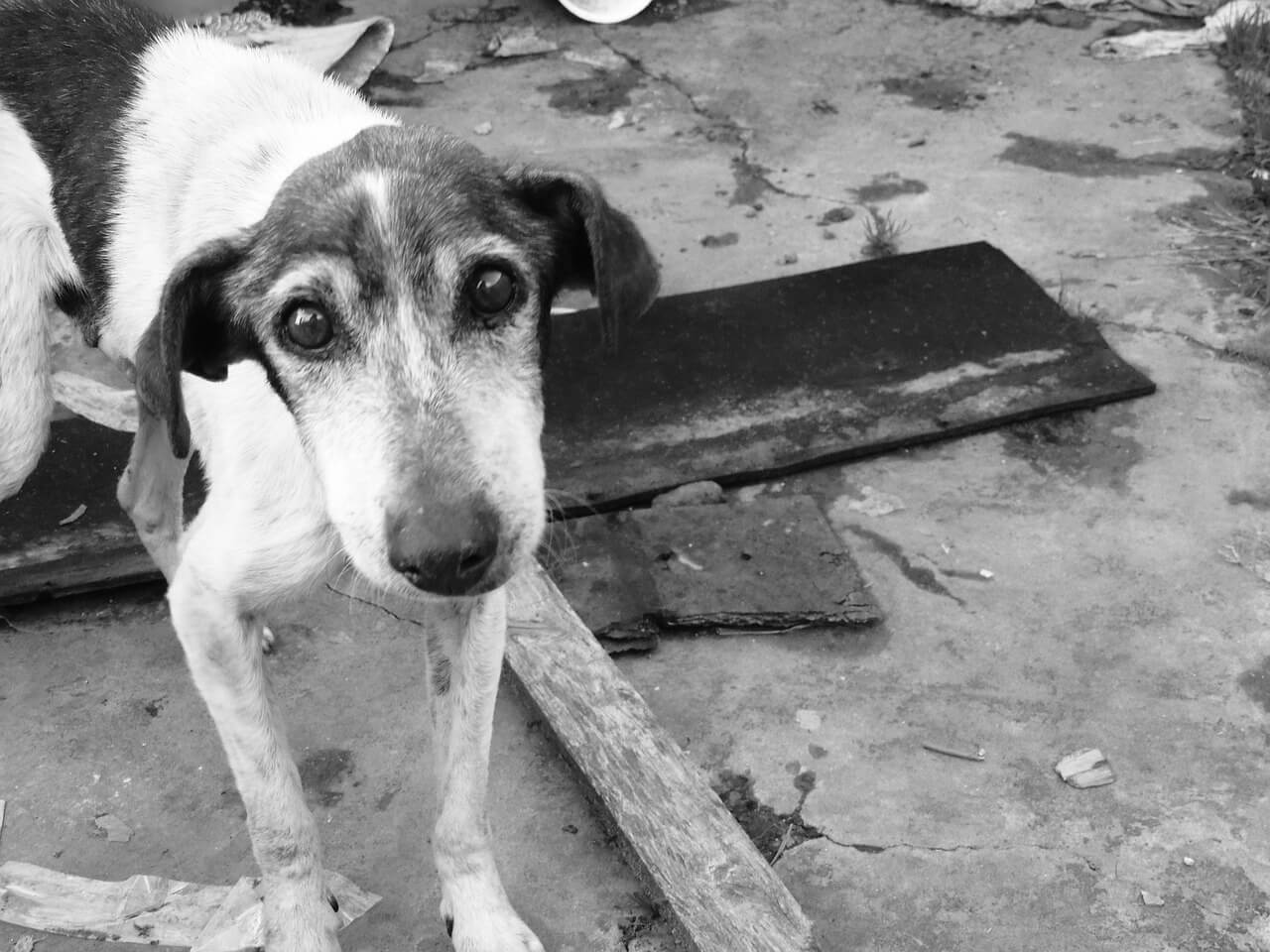 Dogblogger Adventskalender – Türchen 12