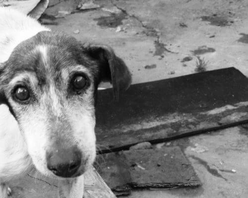 Dogblogger Adventskalender – Türchen 6